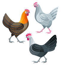 Stylized Chickens - Hens