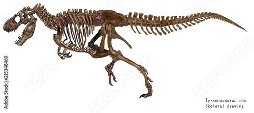 白亜紀の恐竜ティラノサウルス・レックスの骨格イラストレーション画像です。 Canvas Print