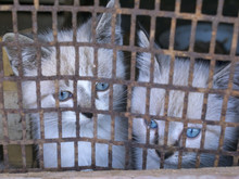 Kittens In A Cage, Violence Ag...