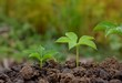 young plants growing step in soil nature on green and yellow background, earth environment concept.