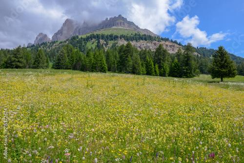 Foto op Canvas Pistache Landscape at Pass Costalunga on Trentino Alto Adige, Italy