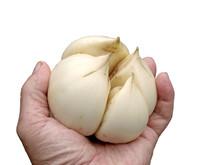 Giant Garlic