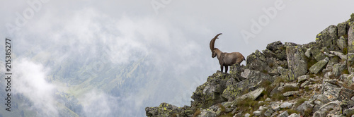 capricorn in the austrian alps, mountain boesenstein, styria, austria