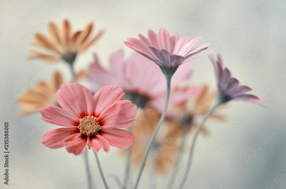 Fototapety, obrazy: Bukiet pastelowych kwiatów