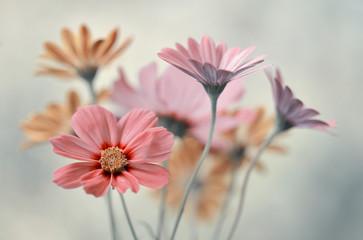 Bukiet pastelowych kwiatów