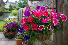 Hanging Basket Filled With Pet...