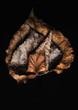 The Beauty of Fallen Leaves