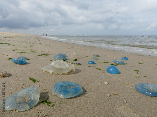 In de dag Noord Europa colourful varieties of jellyfish washed ashore on Dutch coast