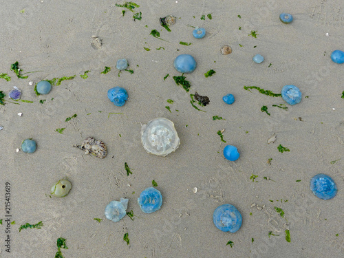 In de dag Noord Europa swarms of washed up jellyfish top view