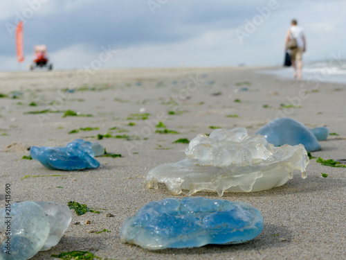 Poster Noord Europa colourful varieties of jellyfish washed ashore on Dutch coast