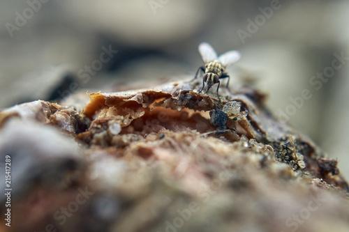 Plakat niektóre muchy na migdałach