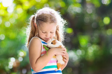 Child With Guinea Pig. Cavy An...