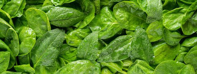 Panel Szklany Podświetlane Warzywa Spinach Panorama