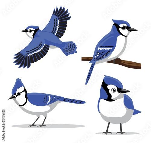 Obraz na plátně Cute Blue Jay Poses Cartoon Vector Illustration