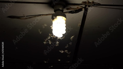 Photo  Moths termites and insects playing bulb light at night,