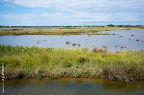 Fototapeta View of Marais d'Olonne - Olonne swamp in Vendée France