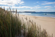 Native grass on the beach in Bruny Island, Tasmania, Asutralia