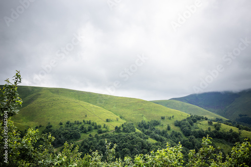 Foto op Canvas Pistache Carpathian forest before rainy night. Landscape with pine forests and mountains in summer. Zakarpattya, Ukraine.