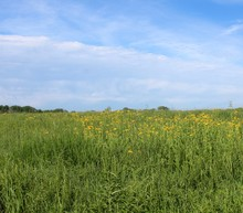 A Field Of Tall Grass And Flow...