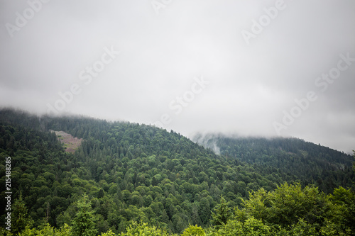 Fotobehang Wit Carpathian forest before rainy night. Landscape with pine forests and mountains in summer. Zakarpattya, Ukraine.