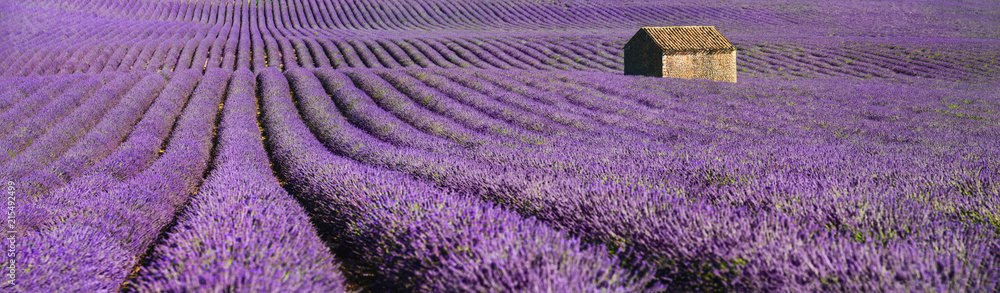 Fototapety, obrazy: provence lavendel