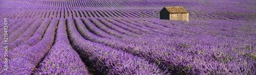 Foto op Plexiglas Lavendel provence lavendel