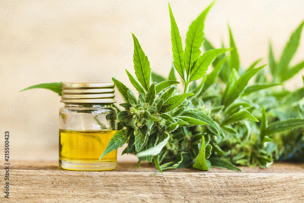 Fototapety, obrazy: CBD oil hemp products medical cannabis