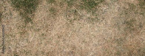 Photographie ausgetrockneter Rasen
