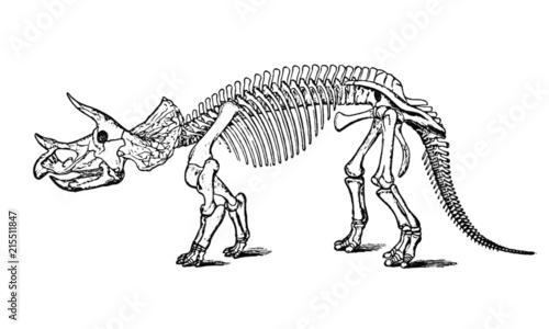 Fotografie, Obraz Vintage Dinosaur Skeleton Illustration