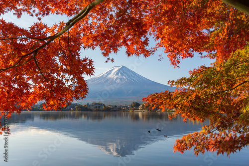 Canvas Prints Cuban Red Japan Autumn Season and Fuji Mountain at beautiful sunrise and red leaves at lake Kawaguchiko,Japan. Mount Fuji is one of the best places in Japan.