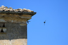 Swallow Flying On A Blue Italian Background