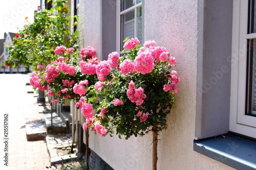 Printed kitchen splashbacks Narrow alley Rosen vor dem Fenster