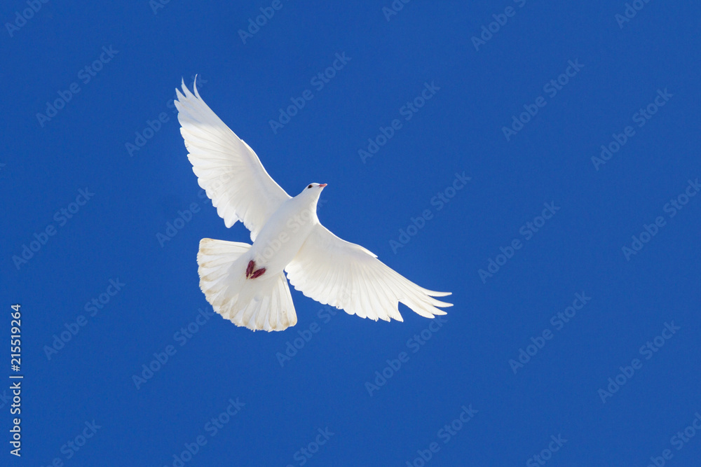 white dove flying through the blue sky