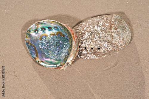 Photo Bright polished Rainbow Abalone Shell on wet sand on the beach at sunrise