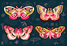 Collection Of Colorful Butterflies, Night Tropical Moths Hawkmoth On Floral Background, Vector Insect Set