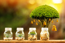 Coin In The Bottle And Tree With Growing And Savings Money Bag Put On The Wood In The Morning Sunlight, Business Investment Concept.