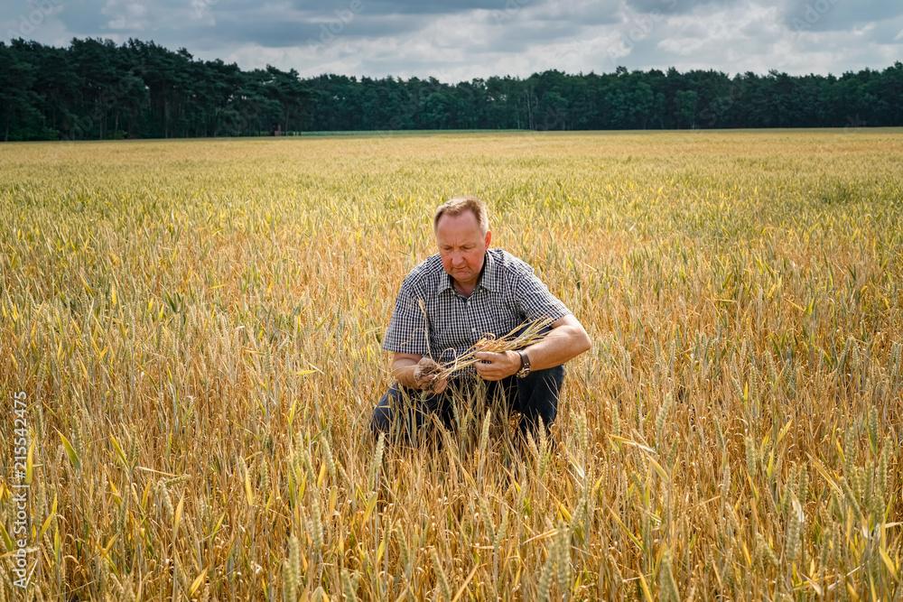 Fototapeta Trockenheit - Dürre, Landwirt hockt ratlos in seinem  vertrockneten Getreidefeld