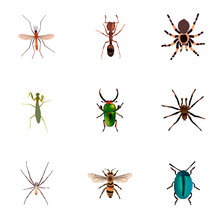 Set Of Bug Realistic Symbols With Housefly, Beetle, Ant And Other Icons For Your Web Mobile App Logo Design.