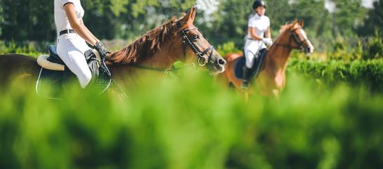 Koń poziomy baner do projektowania nagłówka strony. Koń ujeżdżeniowy i jeździec w mundurze podczas zawodów jeździeckich. Plam zieleni drzewa jako tło.