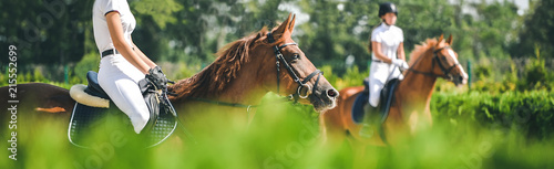 Spoed Foto op Canvas Paarden Horse horizontal banner for website header design. Dressage horse and rider in uniform during equestrian competition. Blur green trees as background.