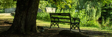 Vintage Bench Under The Tree