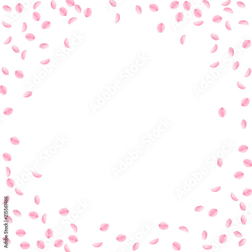 Sakura petals falling down. Romantic pink silky small flowers. Sparse flying cherry petals. Circle f © Begin Again