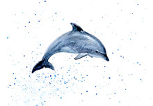 Dolphin Watercolor Hand Draw I...