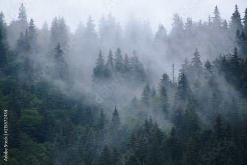Foto auf Leinwand Grau Misty landscape with fir forest in hipster vintage retro style