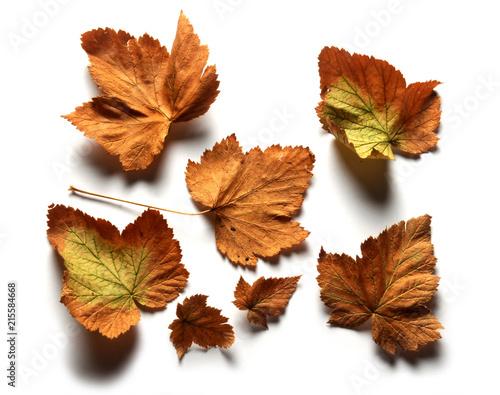 Fotografia, Obraz  Sierade Haust Tardor Autumn Autunno Herbst   خريف 가을 Automne Jesen Осень 秋 סתיו