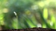 Watering a small tree for save the earth and natural , clean ecology in natural.