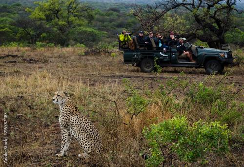 Safari_Rover_Spots_Cheetah Poster