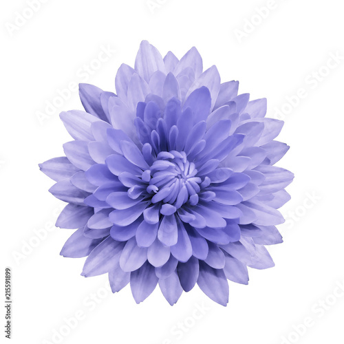 Poster de jardin Dahlia Light violet flower dahlia on a white isolated background with clipping path. Closeup. no shadows. For design. Nature.