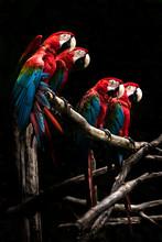 Scarlet Macaw  Beautiful Bird ...