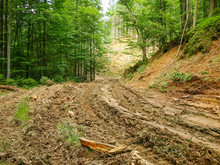 Dirt Road To The Logging Site ...